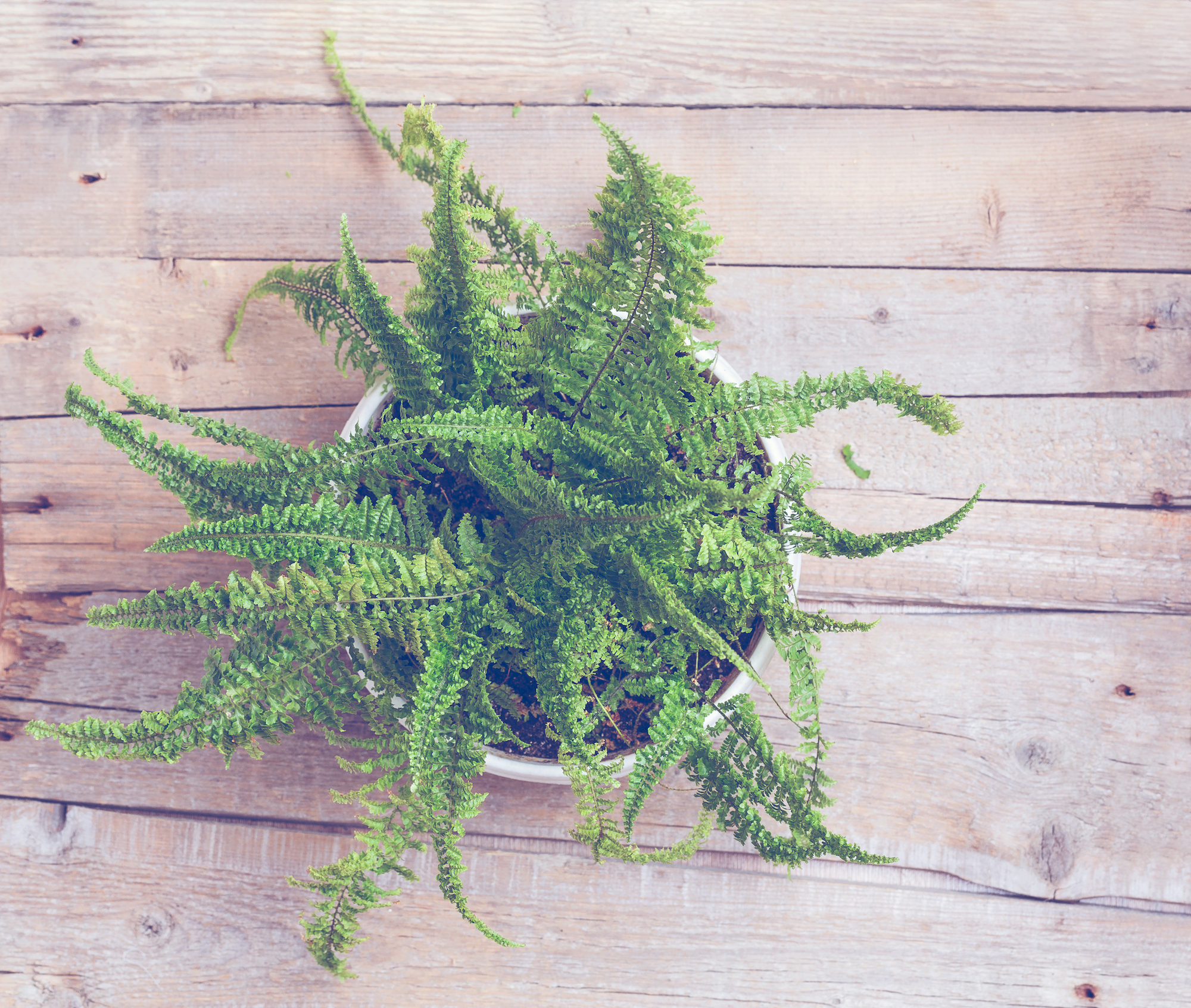 Clean the Air with Plants: 13 Best Plants for Cleaning Indoor Air