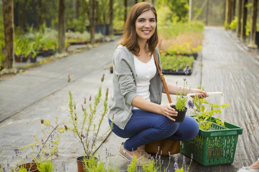 choosing plants to help clean the air